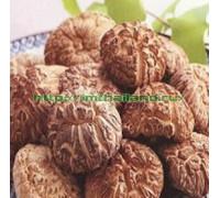 Сушеные грибы шиитаке