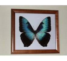 Картина «Бабочка»